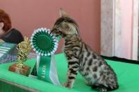 Крис на выставке кошек