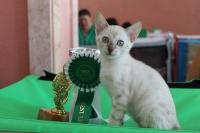 6-7 октября 2012 Новороссийск