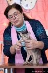 абиссинский котенок 5 месяцев