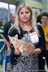 абиссинский котенок окрас фавн