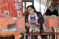 Абиссинский котенок у судьи Ирины Садовниковой