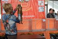 ринг бенгальских кошек на выставке