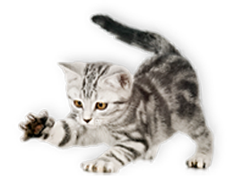 Имя для кота мальчика бенгальского