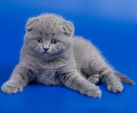 Какая кошка лучше