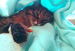 Если кошка заболела. Признаки и симптомы