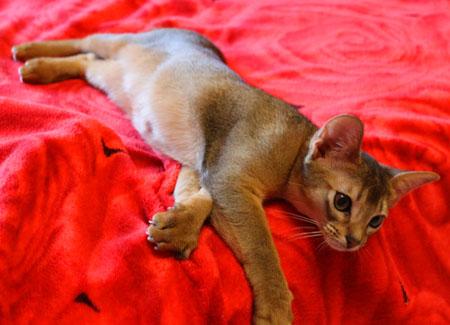 Коту 4 месяца вес