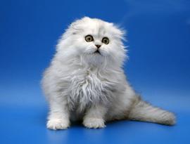котенок затушеванный