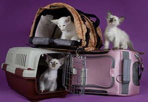 Клетки для переноски котов