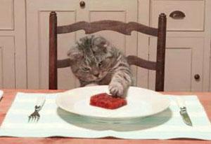 Как перевести кошку на домашнюю еду?