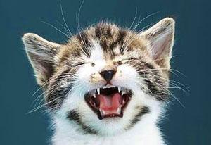 Кошка - мяукающий Гиппократ новые фото