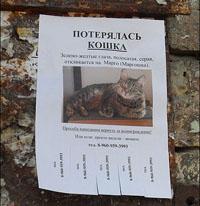 Написать объявление о пропажи кота